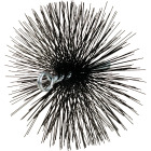 Meeco's Red Devil 6 In. Round Wire Chimney Brush Image 1